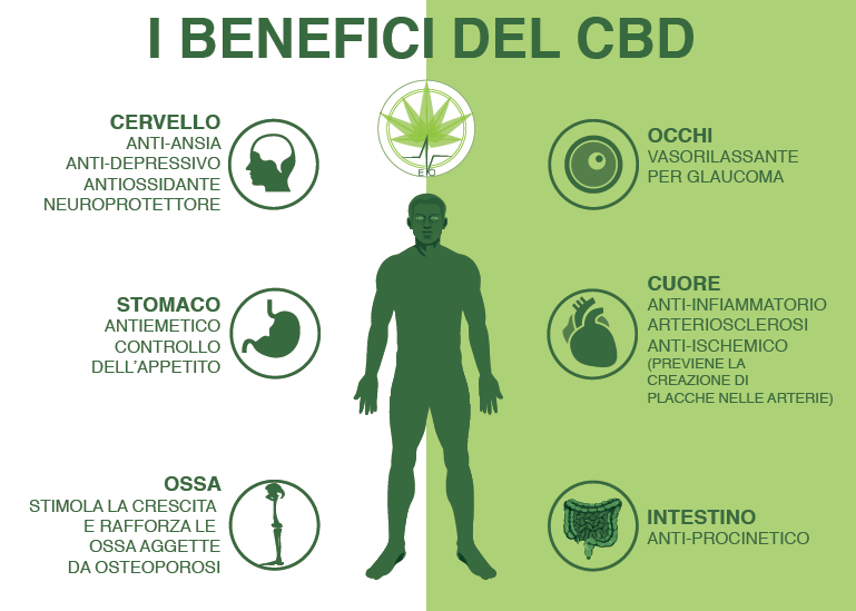 benefici del CBD dal log di Evolutionbnk, produzione di Canapa Light in Italia